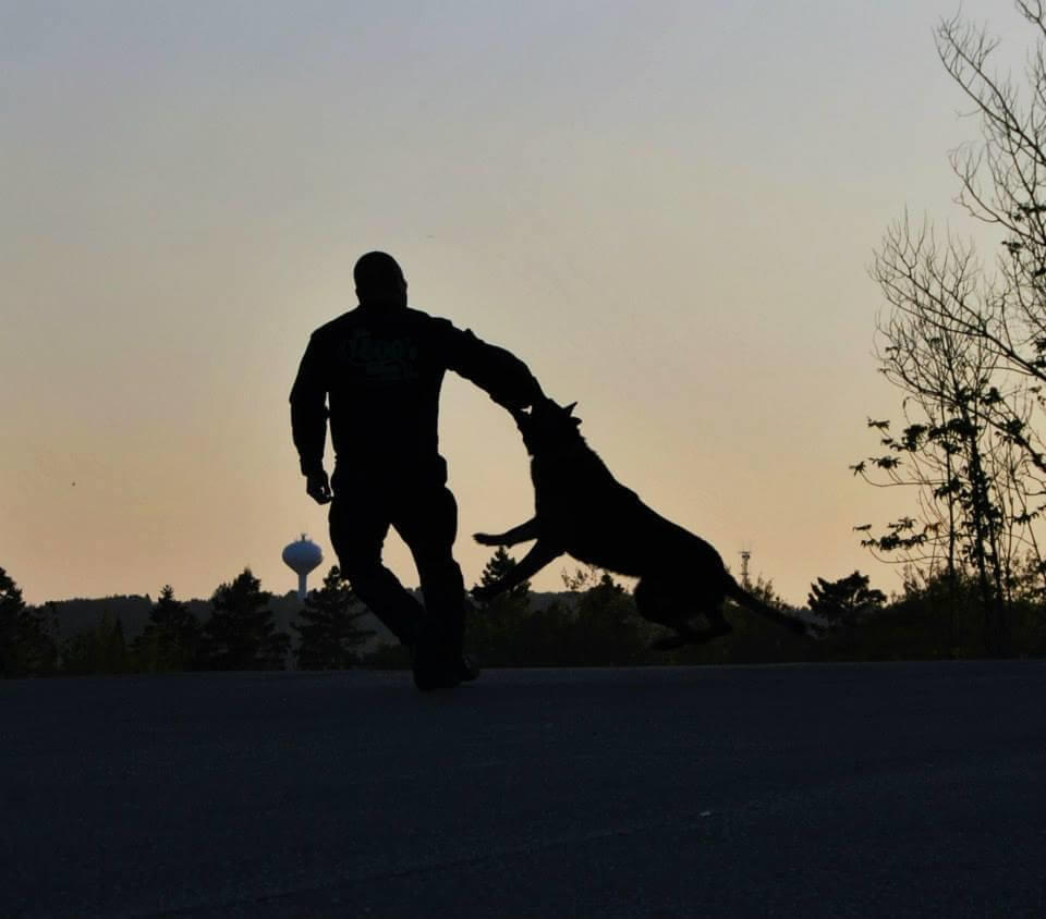 K-9 attacking a persons arm