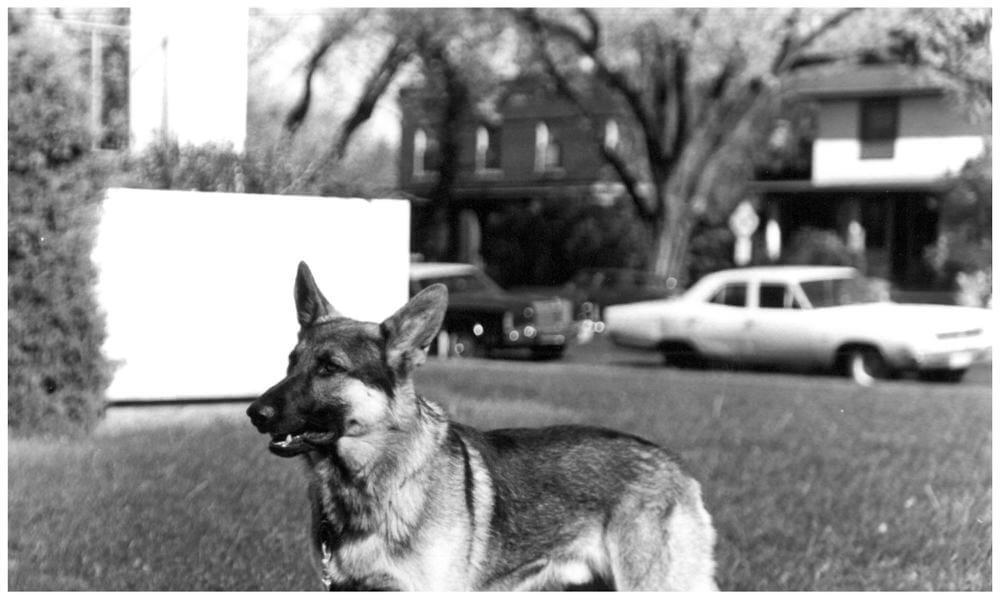 Black and white version of a K-9 standing on the grass