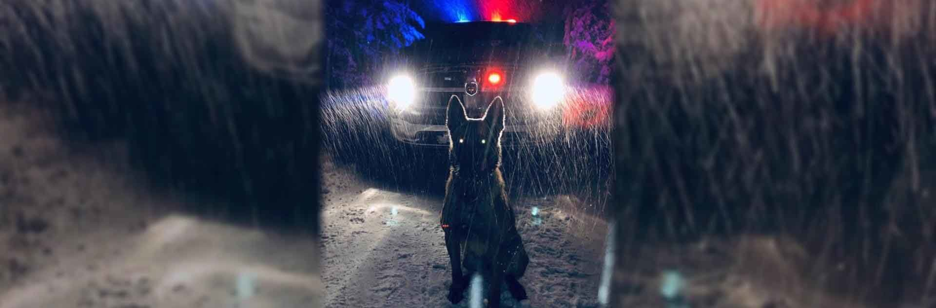 K-9 in front of a patrol car in a winter storm.